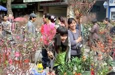Vietnamitas dan bienvenida a Año del Caballo