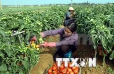 Vietnam y Japón fomentan cooperación agrícola