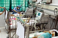 Hanoi impulsa lucha contra encefalitis japonesa