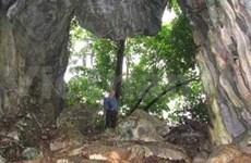 """Thanh Hoa: Anuncian resultados de excavación de cueva """"bestia"""""""