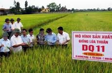 Vietnam apuesto por elevar calidad de arroz