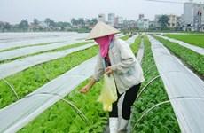 Bac Giang promueve aplicación de alta tecnología en agricultura