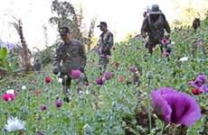 Tailandia y Myanmar fortalecen control de drogas