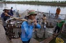 Reanuda Brasil compras de pez Tra vietnamita