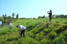Conferencia internacional sobre hierba Vetiver en Da Nang