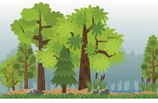 Tasa de cobertura de superficie forestal de Hanoi alcanza 5,67 por ciento
