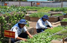 Vitalidad en el archipiélago vietnamita de Spratly