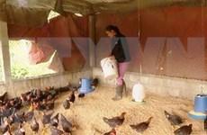 Insta Gobierno vietnamita a reforzar la prevención contra enfermedades del ganado
