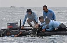 Vicepremier de Vietnam expresa pésame por siniestro aéreo de Indonesia