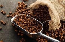 Más de 70 muestras de café participan en Taza de Excelencia de Vietnam 2021