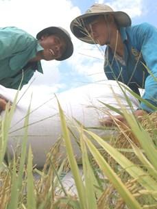 Logros impresionantes de Vietnam en reducción de pobreza