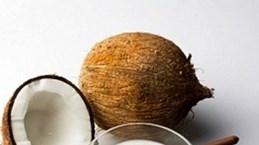 Inauguran mayor fábrica de procesamiento de coco en Ben Tre
