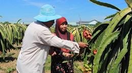 Localidad vietnamita por impulsar desarrollo económico en áreas de minorías étnicas