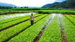 Más de la mitad de empresas vietnamitas se ven afectadas por el cambio climático