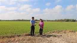 Provincia vietnamita de Tra Vinh se enfrasca en superar la sequía e intrusión salina