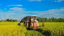 Agricultura, columna vertebral de la economía vietnamita