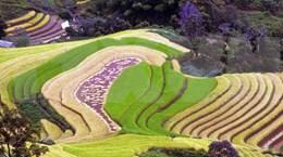 [Foto] Campos de arroz en terrazas en provincia norteña de Son La