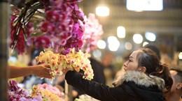 [Foto] Mercado de flores Quang Ba en Hanoi en vísperas del Tet