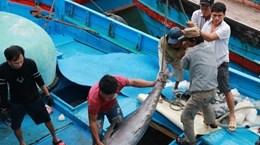 Exhortan en Vietnam mayor esfuerzo en prevención contra la pesca ilegal
