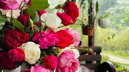 Jardín de rosas en Vietnam recibe certificados internacionales de cultivo orgánico