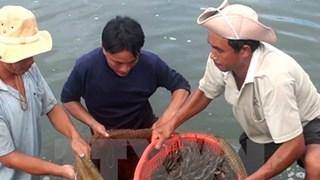 Camarones frescos de Vietnam ante la puerta al mercado australiano