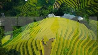Nueva temporada de arroz en tierras altas vietnamitas