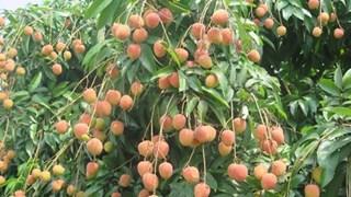 Vietnam estimula consumo de productos agrícolas de localidades afectadas por el COVID-19