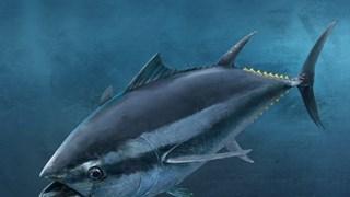 (Televisión) Vietnam- mayor exportador de atún enlatado a Estados Unidos