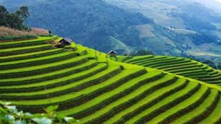 Elige CNBC a Mu Cang Chai en Vietnam atractivo destino para viajeros extranjeros