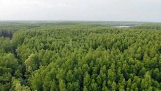 Vietnam se esfuerza por preservar la Reserva de Biosfera del Bosque de manglares Can Gio