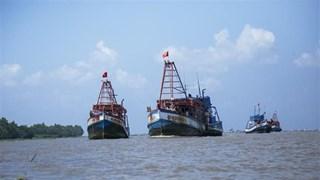 Vietnam combate la pesca ilegal, no declarada y no reglamentada