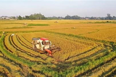 Vietnam cumplirá pronto meta sobre exportación de arroz en 2021
