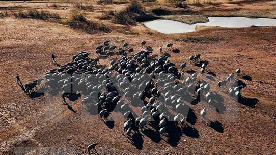 La belleza del paisaje con cientos de búfalos en el lago Suoi Da