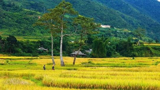 [Foto] Las terrazas de arroz de Mu Cang Chai en temporada de cosecha