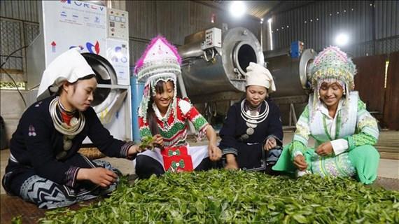 Proyectos agrícolas contribuyen al desarrollo de áreas montañosas en Vietnam