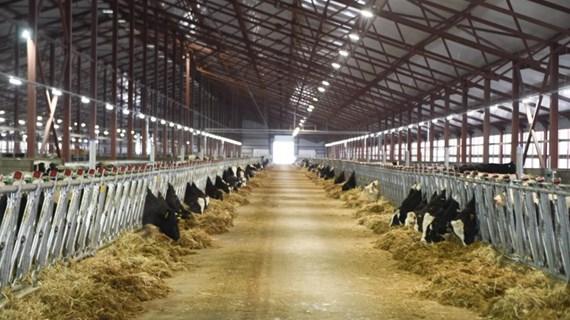 TH Milk, primera empresa vietnamita en exportar leche a China