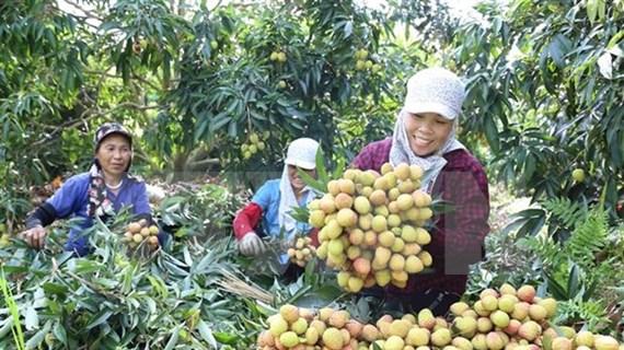 Optimista Vietnam sobre perspectivas económicas, destaca periódico alemán
