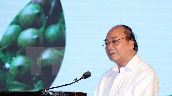 Premier de Vietnam exige mayores esfuerzos para garantizar cultivo eficiente de macadamia