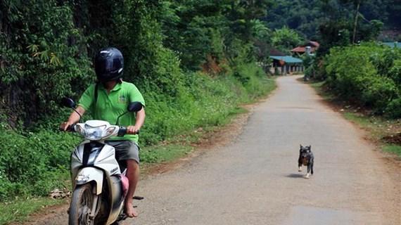 Vietnam por elevar la conciencia pública sobre enfermedad de la rabia