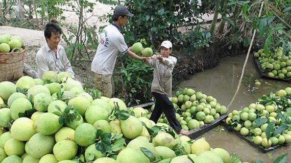 Chile autoriza importación de pomelos vietnamitas