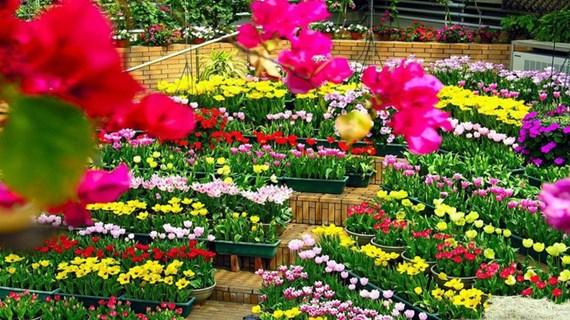 Quang Binh acogerá Festival Internacional de Flores en 2023