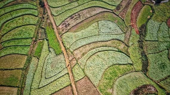 Hermoso campo de flores en la provincia vietnamita de Son La