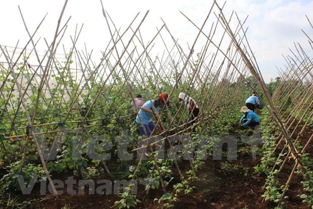 Meta de crecimiento economico: un gran desafio para Vietnam hinh anh 2