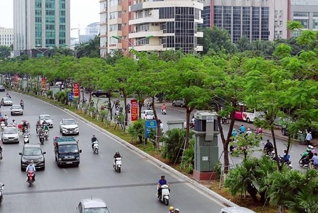 Plantaran en Vietnam mil millones de arboles en etapa 2021- 2025 hinh anh 1