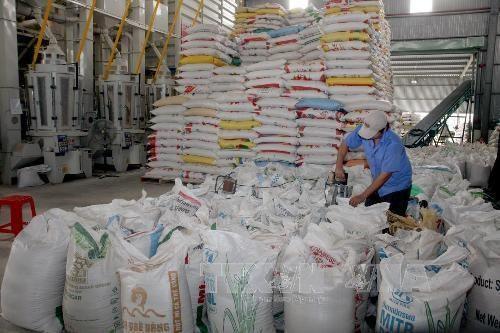 Acuerdos de libre comercio: Fuerza impulsora para las exportaciones de arroz de Vietnam hinh anh 1