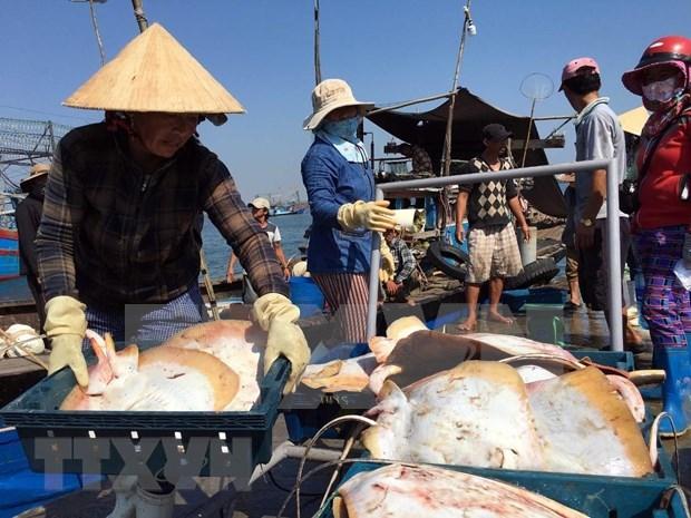 El desarrollo del sector acuicola impulsa la economia maritima de Vietnam hinh anh 1