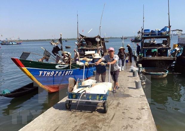 El desarrollo del sector acuicola impulsa la economia maritima de Vietnam hinh anh 2