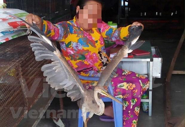 Comercio ilegal de animales salvajes en Vietnam hinh anh 1