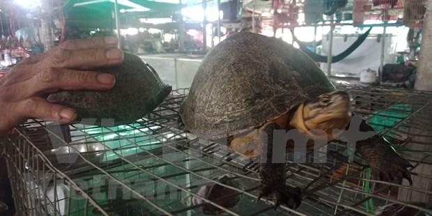 Comercio ilegal de animales salvajes en Vietnam hinh anh 2