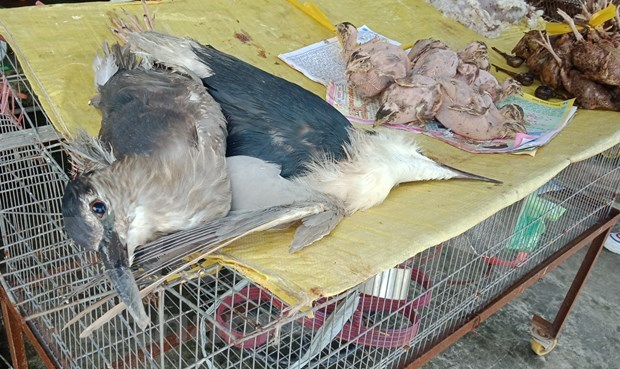 Comercio ilegal de animales salvajes en Vietnam hinh anh 4